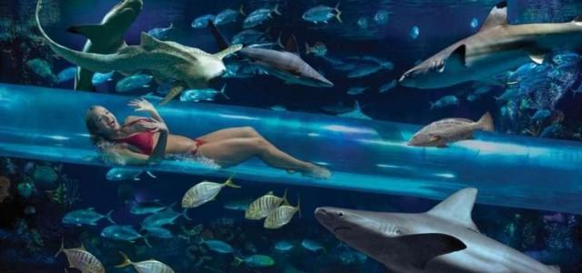 Shark Tank Water Slide