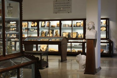 University of Florence Museum of Pathological Anatomy